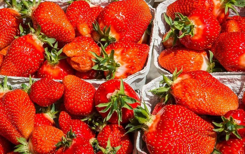 truskawki z uprawy sadzonek